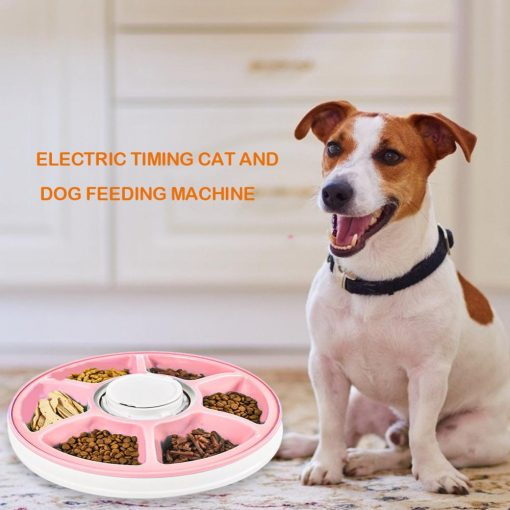 Automatic Pet Timing Feeder, timed cat feeder dog live show 2