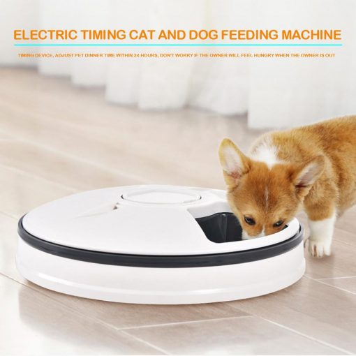 Automatic Pet Timing Feeder, timed cat feeder for cat