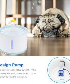 Cat water fountain dog show