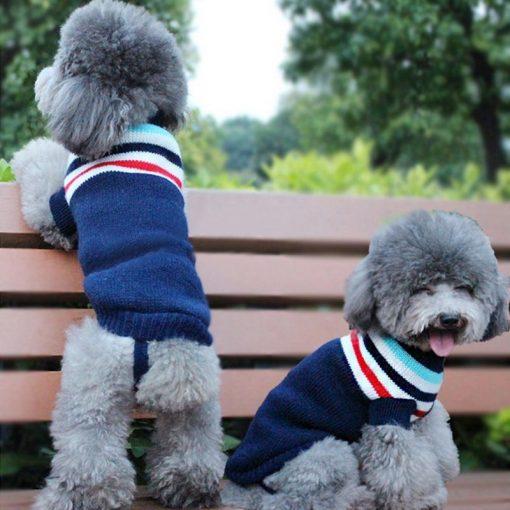 dog sweaters dog show 4