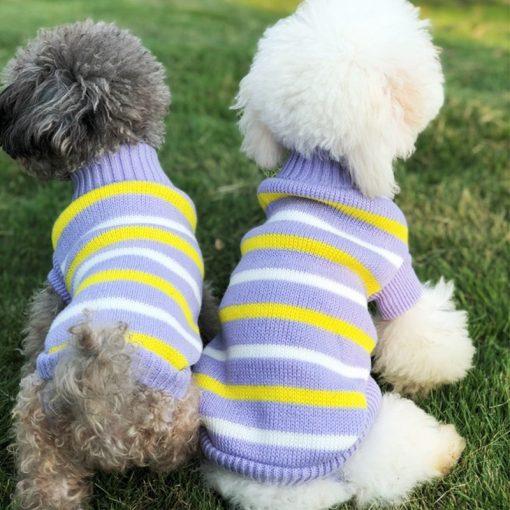dog sweaters dog show 2