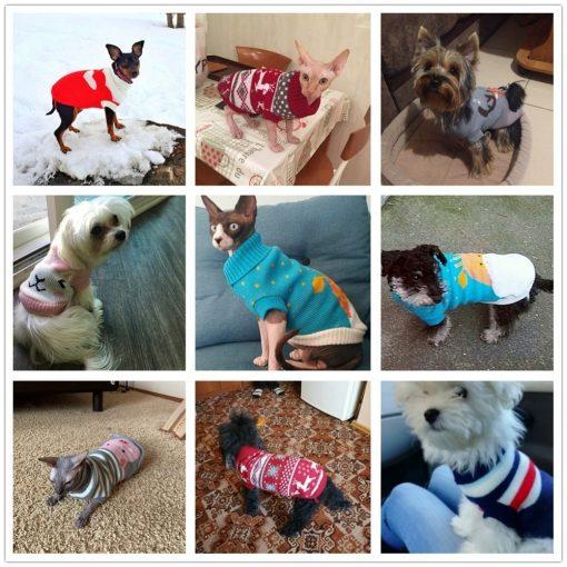 dog sweaters dog show
