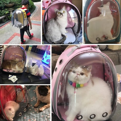 Cat and dog carrier backpack show
