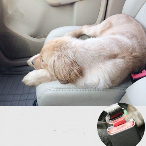 Dog Car harness display