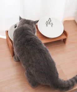 Raised dog bowls show