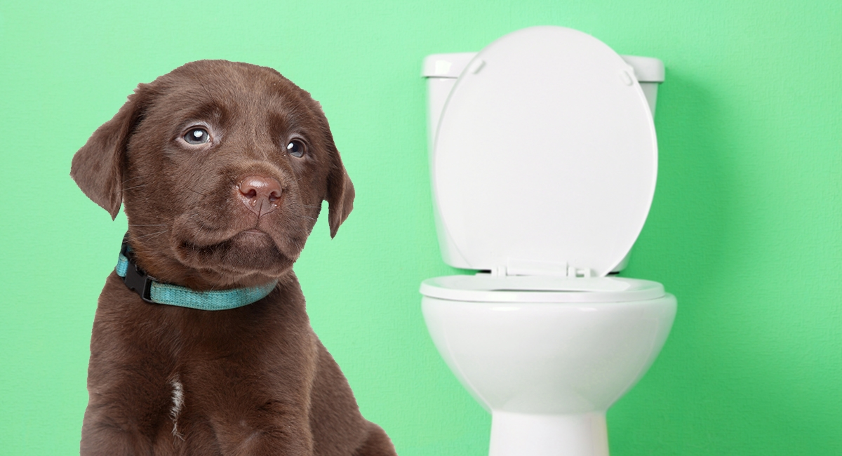 How-To-Potty-Train-A-Puppy-LS-long