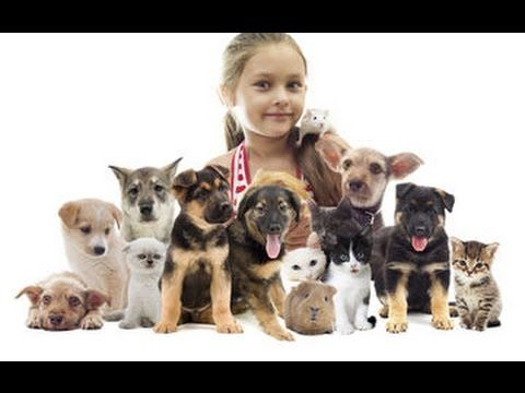 Social skills development with kids and other dogs