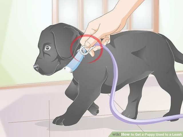 Training dog with a leash